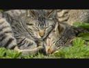 【ニコニコ動画】悪い猫ほどよく眠る・・・【けしからん!かわいさの野獣達】を解析してみた