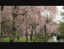 桜の京都【2012/4/15】