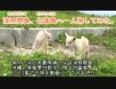 【ニコニコ動画】【有人最南端】波照間島、竹富島へ一人旅してみた【一人旅】を解析してみた