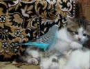 3匹の子ネコにしつこすぎるインコ