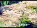 【ニコニコ動画】【東方アレンジ】桜花之恋塚 ~ 花の色はを解析してみた