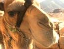 【ニコニコ動画】まったりぶらぶら -中東/エジプト編①-4-を解析してみた