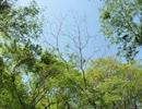 【ニコニコ動画】初夏の雑木林散策を解析してみた