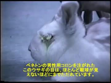 猫やうさぎを動物実験に使う。化粧品 日用品Watch from niconico