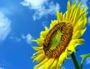 【ニコニコ動画】なんか夏の風景とか夏を感じる画像を見ると死にたくなるを解析してみた