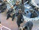 アナロ熊の歌(木管6重奏ver)
