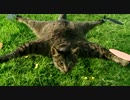死んだ飼い猫をラジコンヘリに改造してみた