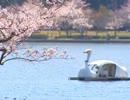 水戸市観光DVD①-1