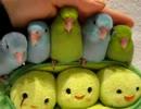 【ニコニコ動画】まだ子供のマメルリハインコ5羽をいっきになでなでするを解析してみた