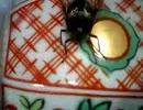 【ニコニコ動画】頭が取れても生きてるハチを解析してみた