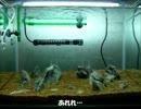 【ニコニコ動画】ちょっと水槽見ていきませんか?part2を解析してみた