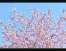 【ニコニコ動画】【GLAY】バギクラ公開録音④ ~HELLO MY LIFE~【LIVE】を解析してみた
