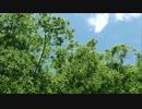【ニコニコ動画】【実写版】川のぬし釣り -連瀑の秘渓!編 part②-を解析してみた