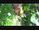 【ニコニコ動画】我が輩は迷子の子犬である、名前はコレから付けてもらう。を解析してみた