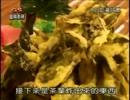 茶葉を使った台湾の数々の料理を食べながら紹介