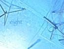 【ニコニコ動画】【オリジナル】eight【NNI】を解析してみた