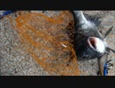 【ニコニコ動画】広島でらくらくフカセ釣りを解析してみた