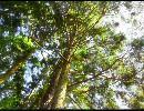 【UTAUオリジナル】木漏れ日【薪宮風季】