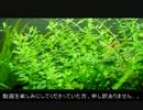 【ニコニコ動画】落ち武者レイアウターが水草レイアウトするぞ!【PART3】を解析してみた