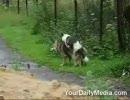 【ニコニコ動画】犬が交尾してたから録画してたら・・・を解析してみた