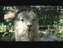 【ニコニコ超会議2】Jくんとミルクちゃんからの応援メッセージ thumbnail