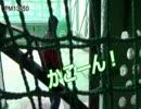 【ニコニコ動画】リアル桃鉄を花見の前にやってきました part7を解析してみた
