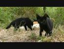 【ニコニコ動画】仁義ある食卓Ⅳ【野良猫はヤクザな道なり】を解析してみた