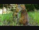 【ニコニコ動画】今日も平和な猫テリトリー【けしからん!可愛さの野獣達】を解析してみた