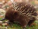 タスマニアの動物写真の詰め込み