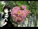【UTAU】 喝采 【根音ネネ】
