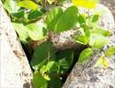 【ニコニコ動画】【NNI】the tender green of leaves【オリジナル曲】を解析してみた