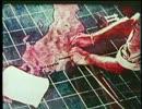 【ニコニコ動画】東京大空襲 (01 of 02)を解析してみた