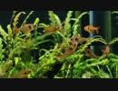 【ニコニコ動画】小型でジャングルな水槽を立ち上げてみたを解析してみた