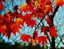 【ニコニコ動画】【オリジナル曲】scarlet leavesを解析してみた