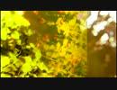 【ニコニコ動画】【ほるん x Gumsyrop】p.m.11:41【NNIオリジナル曲】を解析してみた