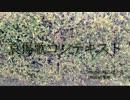 【IA】哀傷歌コンテキスト【オリジナル曲/MV】