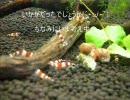 【熱帯魚】ふしゃふしゃコリドラス ver2 thumbnail