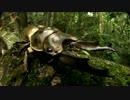 巨大昆虫の世界 ~密林に幻の黄金クワガタを追う~ (01 of 04)
