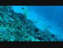 【ニコニコ動画】スキューバダイビング動画を作ってみた【モルディヴ】を解析してみた