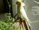 【ニコニコ動画】羽毛100%天日干しを解析してみた