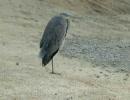 【ニコニコ動画】鳥だらけを解析してみた