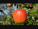 【ニコニコ動画】 【再現料理】それいけ!アンパンマンより【アップルパイ】を解析してみた