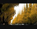 明治神宮外苑 いちょう並木