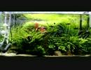 【ニコニコ動画】LEDで水草が育つのか実験してみたを解析してみた