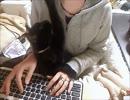 猫あるある「いいから遊べにゃ!!」 thumbnail