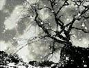 【ニコニコ動画】【Tonio】鈍色空に花吹雪【カバー】を解析してみた