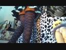 【ニコニコ動画】ニコ生でパンチラしてみた(ドラムンベース編)を解析してみた