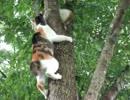 【ニコニコ動画】【猫の】木から下りられなくなった子猫を助けに向かう親猫【親子愛】を解析してみた