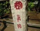 【珍寺】富士神社の血文字石碑群
