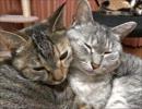 【ニコニコ動画】家猫日和 くっつくを解析してみた